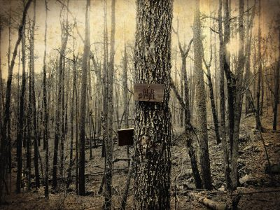 """Urban Farmhouse Style Art featuring a dark forest and sign that says """"Old Still"""""""