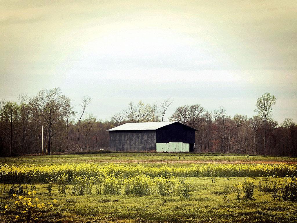Rustic-Barn-Wall-Art-In-the-Weeds-Backwater-Stills