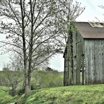 Farmhouse style wall art featuring wooden barn on a hill next to a large tree