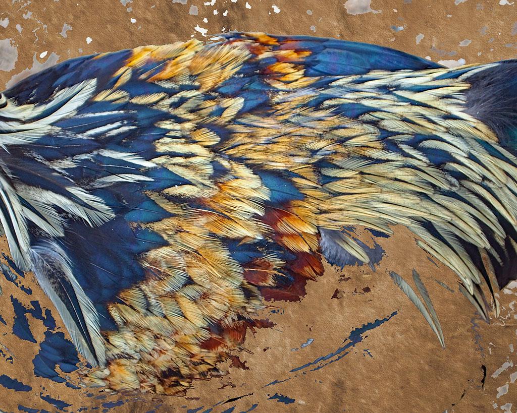 Chicken-Art-Dalis-Feathers-Backwater-Stills