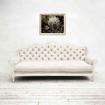 Black and white thistle flower on wall above white couch
