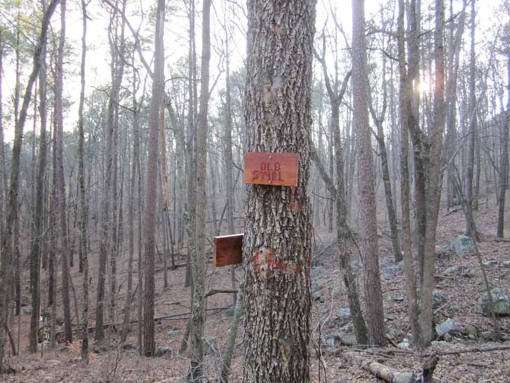 Original photo of tree with Old Still sign in Guntersville State Park, Alabama